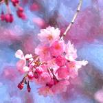 """Blooming cherry blossom 3"" by lanjee"
