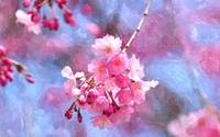 Blooming cherry blossom 3