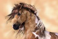 Golden Brown Paint Horse