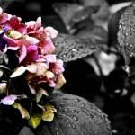 """Purple Rain"" by BMoorePhotography"