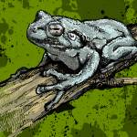 """Gray Tree Frog"" by MarkDanielsArts"