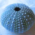"""""""urchin"""" by Lala"""