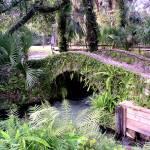 """Bridge at Juniper Springs, Florida."" by YvieArtist"