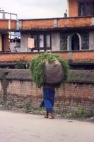 Didi carrying fodder for the animals