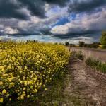"""Rural Field in Bloom"" by bonniebruno"