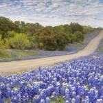 """Texas Bluebonnets Highway, Texas Hill Country"" by RobGreebonPhotography"