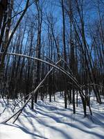 Winter Day in the Gatineau Park 3