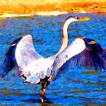"""""""Great Blue Heron (Watercolor)"""" by ralphnelsen"""