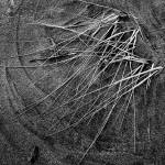 """Windswept Dune Grass"" by bavosiphotoart"