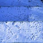 """Blue Snow Bird Tracks"" by KsWorldArt"