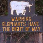 """Elephants have the Right of Way"" by ursulaosteneckimages"