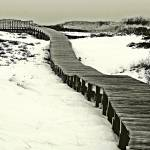 """Plum Island Boardwalk"" by bavosiphotoart"