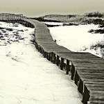 """""""Plum Island Boardwalk"""" by bavosiphotoart"""