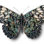 """""""Black Butterfly"""" by Elizabeth_Martin"""