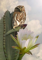 Owl and Peruvian Apple Cactus
