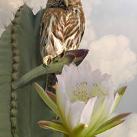 Owl and Peruvian Apple Cactus by I.M. Spadecaller