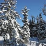 """""""Winter in Canada"""" by schlicht"""