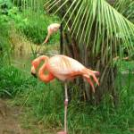 """Why do Flamingos balance on one leg?"" by AnnSmith"