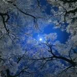 """""""Moonlight Trees"""" by zenin"""