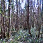 """woods"" by iamthefit"