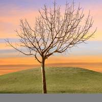 Bare Tree in Sunset Solitude