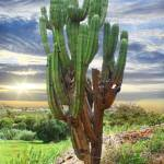 """Organ Pipe Cactus in Yagul, Oaxaca, Mexico"" by charker"