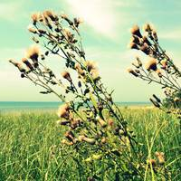 Thistle on the Beach
