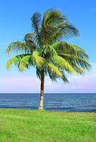 Swaying Palm by the Sea