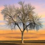 """Bare Tree at Sunrise"" by charker"