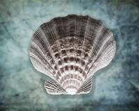 Luminous Scallop Shell