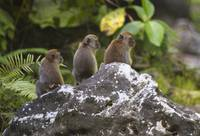 Macaques-014
