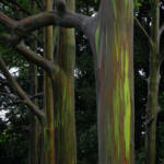 """""""Painted Trees"""" by 13thAvenue"""
