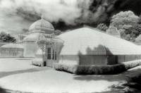 Conservatory of Flowers In Infrared #1
