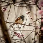 """bird on a tree in snow"" by digidreamgrafix"