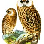"""""""Laughing Owls"""" by mariancates"""