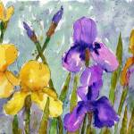 """Bearded Irises, watercolor art purple yellow"" by schulmanart"