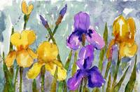 Bearded Irises, watercolor art purple yellow