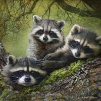 """raccoons as art"" by rchristophervest"