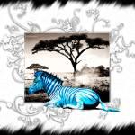 """""""Zebra Zebra Zebra"""" by palious"""