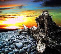 Driftwood in the Sunset #1