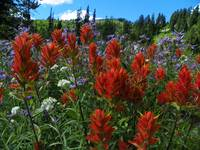 Alpine Garden - Mount Rainier National Park