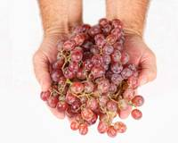 Two Handfuls of Red Grapes