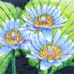 """Manganese lilys"" by Pauljs"