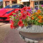 """Flowers and a Ferrari"" by cchenoweth"