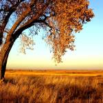 """""""autumn field"""" by mfajardo"""