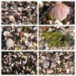 """Seashells and Rocks Collage"" by Groecar"