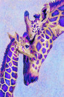 Two purple giraffes