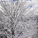"""""""Winter Tree 1"""" by NCCreations"""