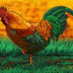 """Rooster"" by Tim"