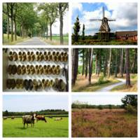 Brabant Collage